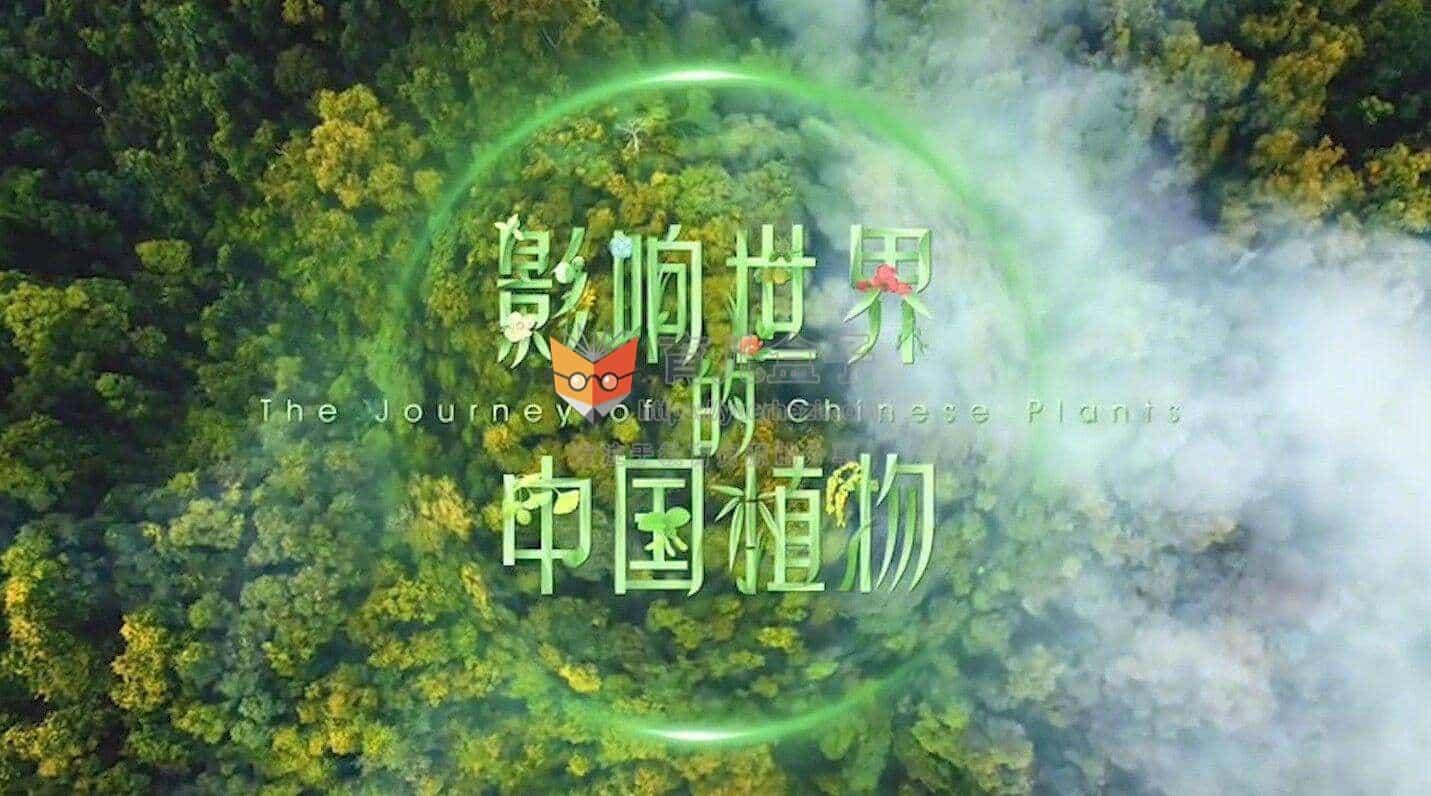 影响世界的中国植物 共10集 高清视频